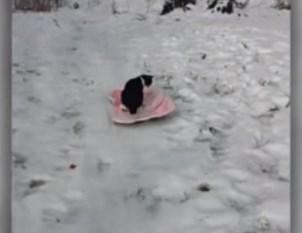 ニャンコがソリに乗って坂を滑り降りる映像