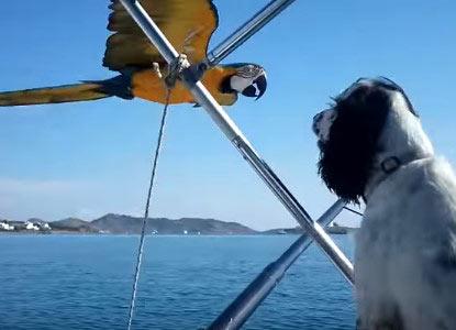 ボートに並んで飛ぶコンゴウインコにワンコびっくり