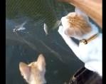 ボートの上で網にかかった魚を待つニャンコ達