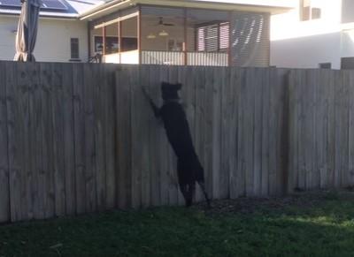 お隣さんが驚異的な跳躍力を悪用して覗いてくるんだけど!