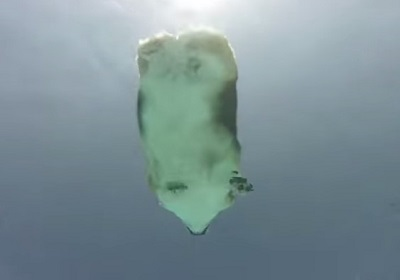 コーギーの泳ぐ姿を水中から撮影
