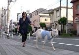 ヤギと一緒に暮らす日本人女性