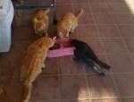 猫たちのお食事タイムにカラスが紛れ込む