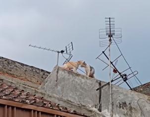 喧嘩していた2匹の猫が屋根から転げ落ちる