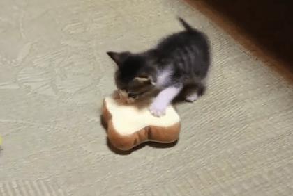 パンのおもちゃで遊ぶ子猫