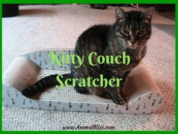 kitty couch scratcher no