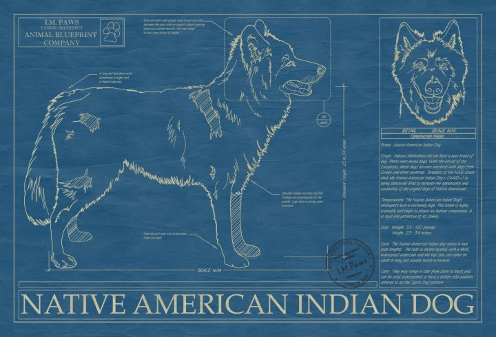 Dogs with two colored eyes native american todayss native american indian dog animal blueprint company malvernweather Gallery