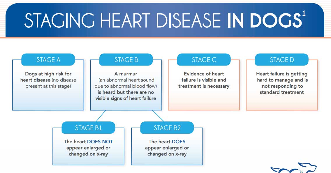 Veterinary Heart Disease Treatment in Branson MO | Animal ...