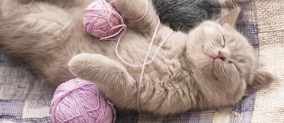 Συμπεριφορα γατας