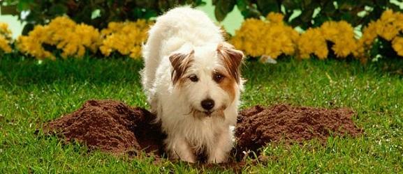 Πως να σταματήσετε ένα σκύλο που σκάβει υπερβολικά