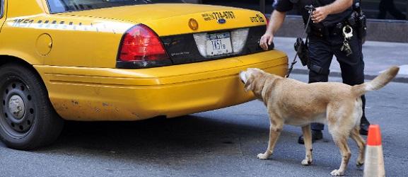 Πως εντοπίζουν οι σκύλοι τα ναρκωτικά