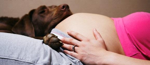 Γνωρίζει ο σκύλος μου ότι είμαι έγκυος;