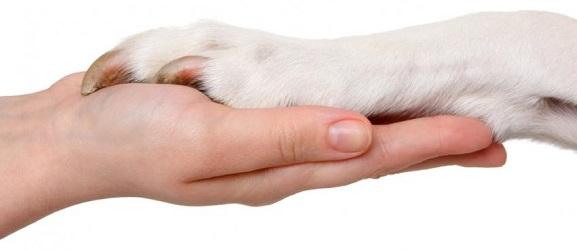 Μερικές συμβουλές για το κόψιμο των νυχιών του σκύλου