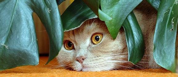 Πως να κρατήσετε τη γάτα μακρυά από τα φυτά