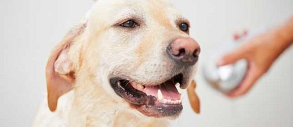 Πως να φροντίσετε το ξηρό δέρμα του σκύλου σας