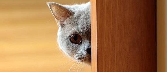 Συμβουλές για τους νέους ιδιοκτήτες γάτας