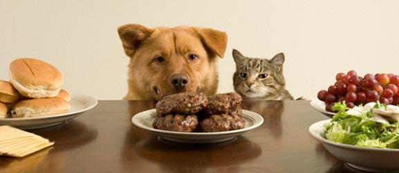 Ασφαλή ανθρώπινα φαγητά για το σκύλο σας