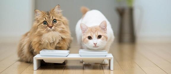 Animalcity.gr - Νερό ή γάλα για τη γάτα μου
