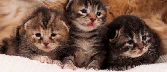 Πως να διακρίνετε την ηλικία από ένα γατάκι
