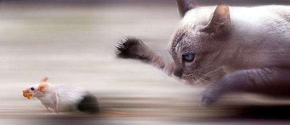 Πως να σταματήσετε το κυνήγι μιας γάτας