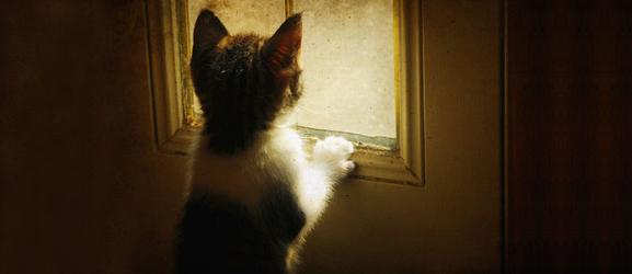 Άγχος αποχωρισμού στις γάτες