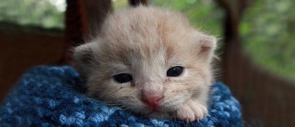Κάνει να αγγίζετε τα νεογέννητα γατάκια;