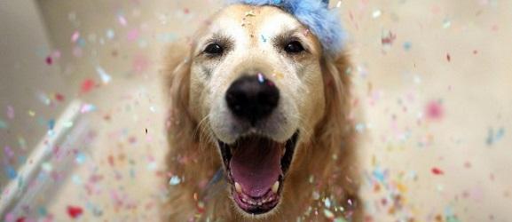 Η ηλικία του σκύλου σε ανθρώπινα χρόνια
