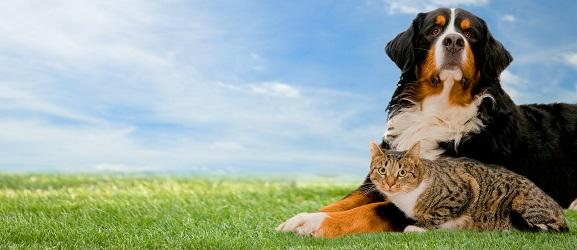 Η καθαριότητα της γάτας έναντι του σκύλου