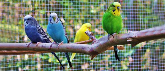 Animalcity.gr - Κατοικίδια πτηνά σε εξωτερικό χώρο