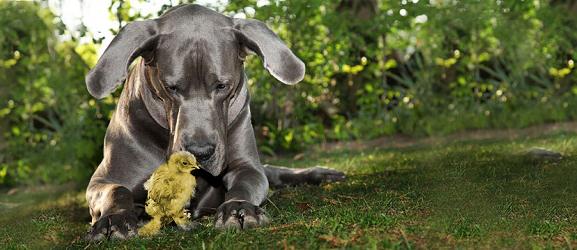 Animalcity.gr - Ασθένειες που μπορεί να κολλήσει ο σκύλος σας από πτηνά