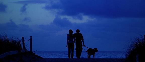 Animalcity.gr - Κρατήστε το σκύλο σας ασφαλησ τη ρβαδινη βολτα