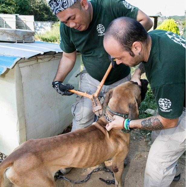 Dog-meat-farm