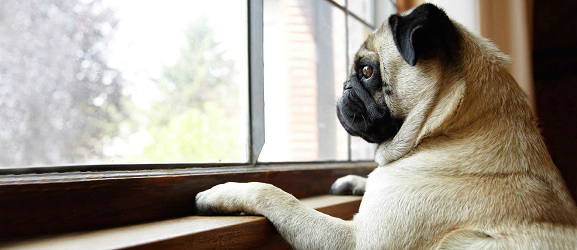 Άγχος αποχωρισμού στους σκύλους