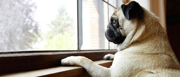αγχος αποχωρισμου στους σκύλους