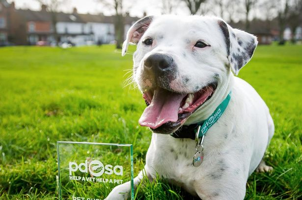 Animalcity.gr - Σκύλος επέζησε από βέλος στο κεφάλι 2