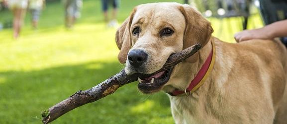 Φάρμακο βοηθά τους σκύλους να ζήσουν περισσότερο!