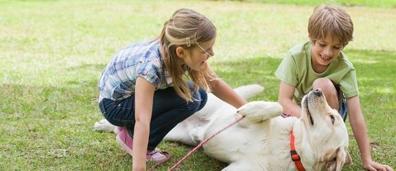 Ράτσες σκύλων ιδανικές για παιδιά!