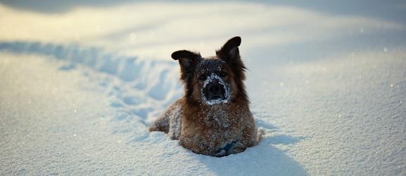 Υποθερμια σκυλου