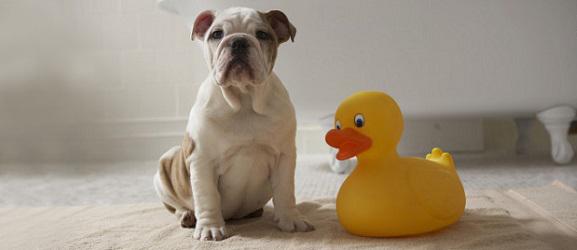 Πως να κάνετε μπάνιο ένα σκύλο