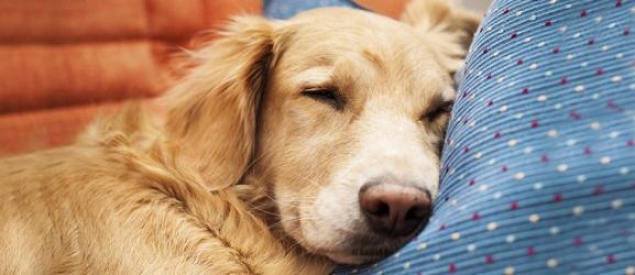 Animalcity.gr - Προειδοποιητικά σημάδια καρδιοπάθειας στον σκύλο