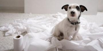 εκπαιδευση σκυλου για τουαλετα