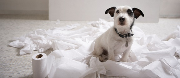 Εκπαίδευση σκύλου για τουαλέτα