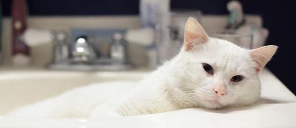 Πως να κάνετε μπάνιο μια γάτα