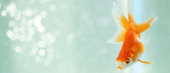 Πως αναπνέουν τα ψάρια