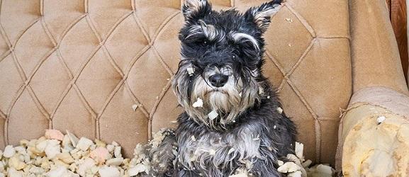 5 συμβουλές για το άγχος αποχωρισμού στους σκύλους