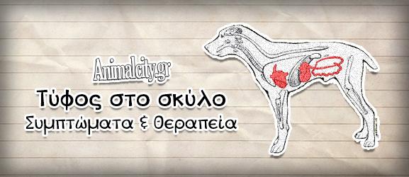 Τύφος σκύλου (παρβοϊός) – Συμπτώματα & Θεραπεία