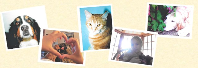 Collage of 6 pictures of pets and people, left to right: Bernese mountain dog, view through heart made with fingers to boy and Golden Retriever, Young girl holding orange tabby cat, backlit, old Golden retriever sleeping near bleeding heart flower