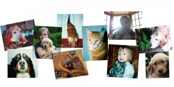 Client Information Handouts Collage of 10 photos of pets sharing the love with family and friends. Across the top are a Golden retriever with a mouthful of toys, a young woman holding a Golden retriever puppy, A dog standing on a sofa peering out the drapes waiting for the owner to come home, close up on an orange tabby cat, young woman holding an orange cat backlit, a very senior dog napping in a flower bed, second row of photos is a Bernese Mountain dog, view of young boy and dog through hands making a heart frame, toddler holding a grey tabby kitten, and close up on golden retriever puppy