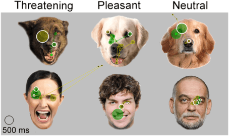 Dogs Facial Scanning Emotions, dogs recognize human emotions