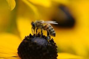 Bees surprisingly smart animals